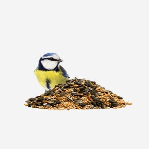 Food for Birds