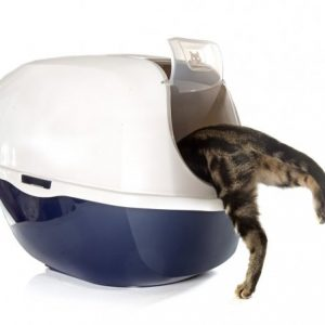 Cat Litters & Litter Boxes
