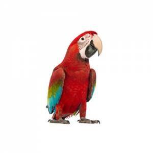 Birds Supplements